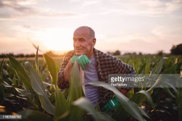 retired man nostalgic about his younger days - agronomist stock pictures, royalty-free photos & images