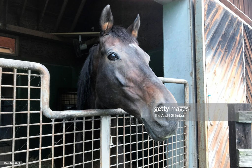 Retired racehorse Deep Impact is seen at Shadai Stallion Station a week after the magnitude 6.7 earthquake on September 13, 2018 in Abira, Hokkaido, Japan. Concerns are rising about the health of the evacuees because prolonged life in shelters can pose serious risks. Living away from home and together with strangers puts enormous mental and physical strains on evacuees.