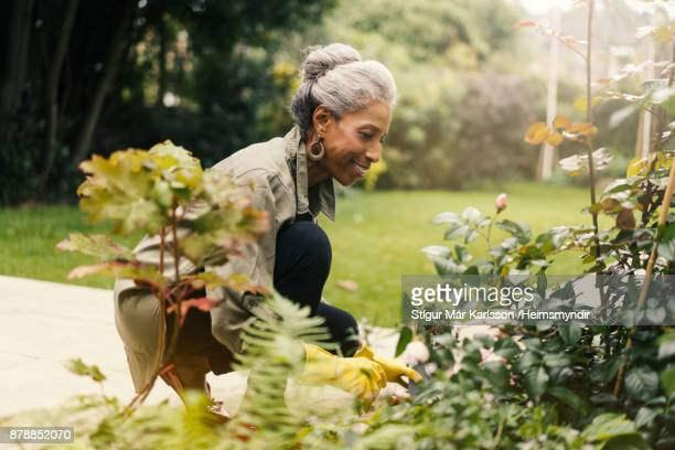 retired senior woman gardening in back yard - active senior stock photos and pictures