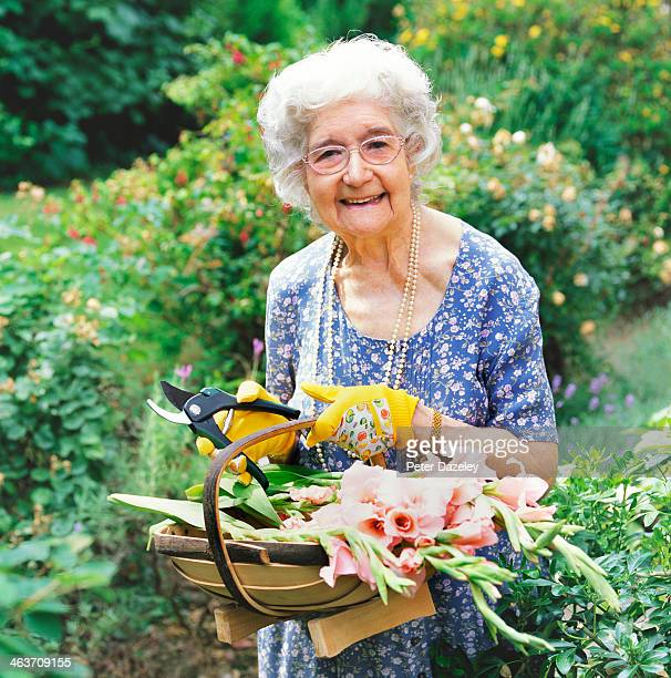 retired woman cutting flowers - one senior woman only stock pictures, royalty-free photos & images