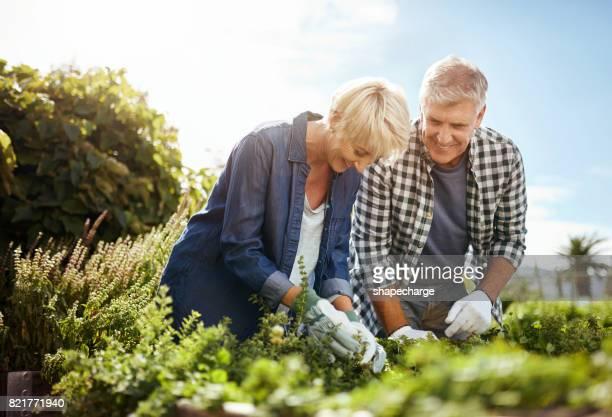 Pensioen is de tijd te besteden meer tijd aan tuinieren