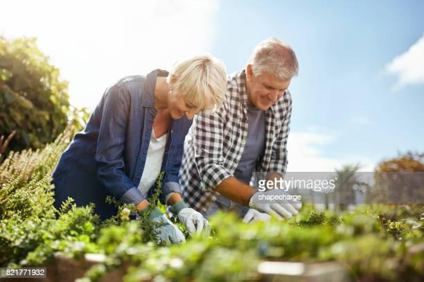 Pensioen biedt de tijd en ruimte om te proberen nieuwe hobby 's