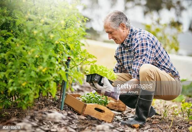 Retiring the green way