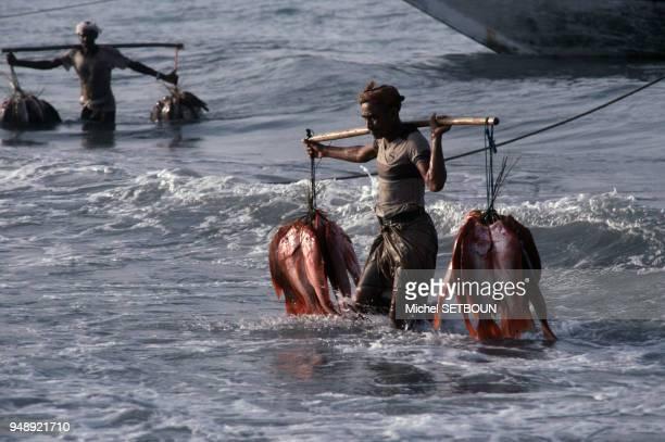 Retour de la pêche à Al Hudaydah en mars 1985 Yémen