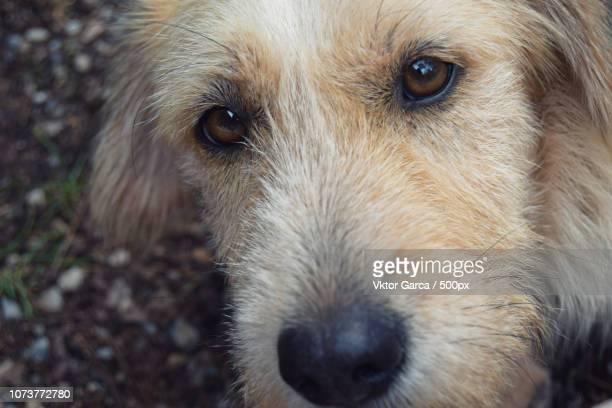 Retrato canino (2015)
