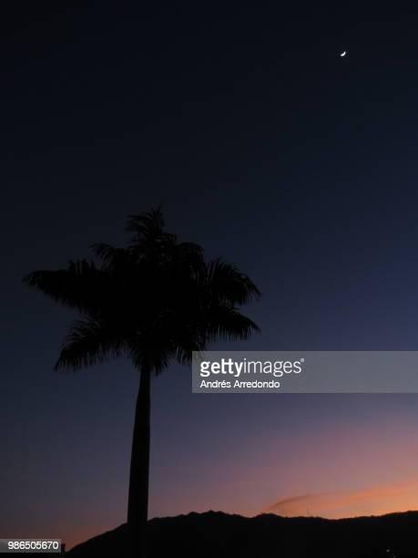 Retrato de una palmera