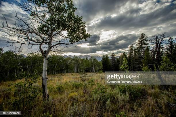 retreating storm - retreating ストックフォトと画像