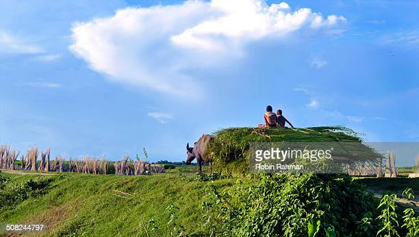 return home - bangladesh village stock photos and pictures