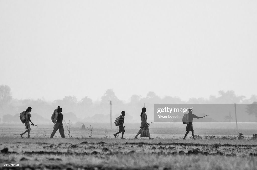 Returning after the works in the field : Stock Photo