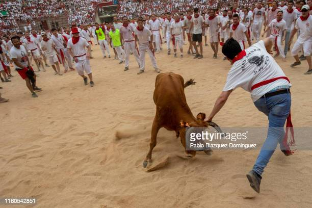 A reveller runs by a heifer in the bullring during the second day of the San Fermin Running of the Bulls festival on July 07 2019 in Pamplona Spain...