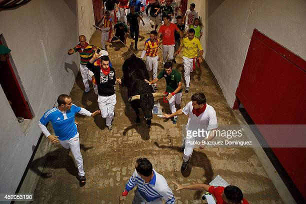 Revellers run with the Fuente Ymbro's fighting bulls through the passage into the bullring during the seventh day of the San Fermin Running Of The...