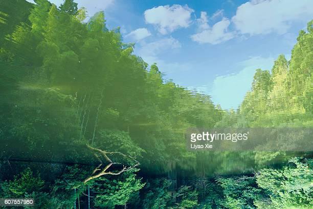 reversed reflection - liyao xie fotografías e imágenes de stock