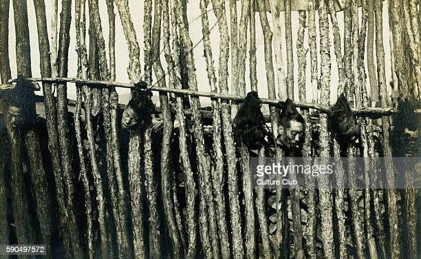 Revolution in Hankow / Hankou 1911 Decapitated heads of Chinese revolutionaries hang by their hair from a pole