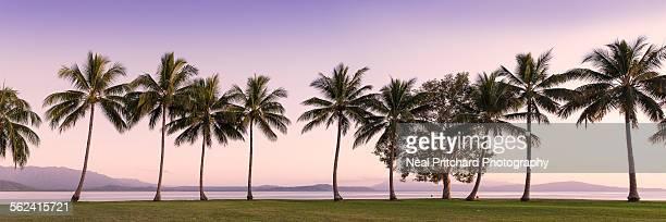 Rex Point Port Douglas