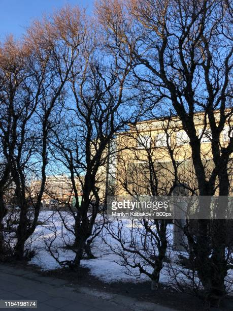 reykjavik scenic winter beauty - marilyn kabakov stock photos and pictures