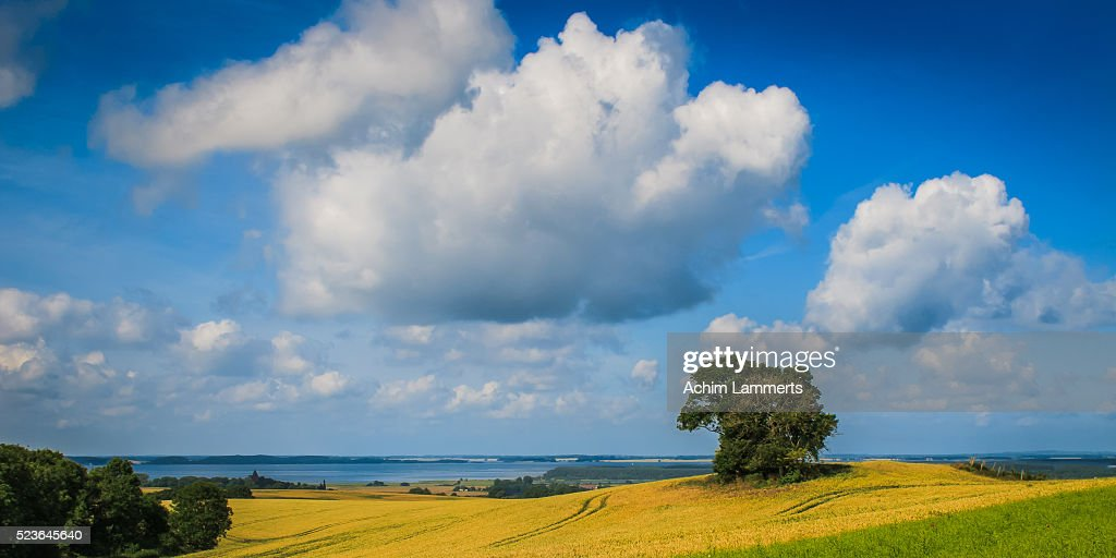 Rügen (Ruegen), landscape with solitary tree against  blue cloudy sky : Stock-Foto