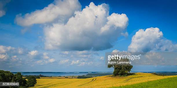 rügen (ruegen), landscape with solitary tree against  blue cloudy sky - achim lammerts stock pictures, royalty-free photos & images
