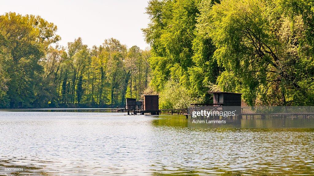 Rheinaue - Altrhein Jockgrim : Stock-Foto