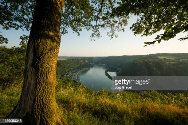 rhine river and lorelei rock - tree trunk stock pictures, royalty-free photos & images