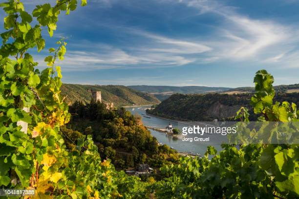 rhine river at kaub (early autumn) - rhine river stock pictures, royalty-free photos & images