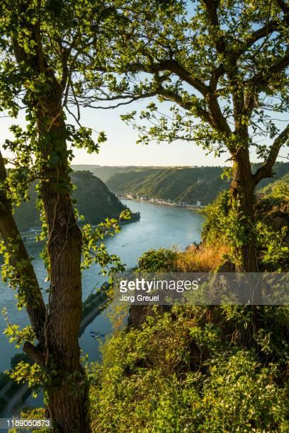 rhine river at sunset - ラインラント=プファルツ州 ストックフォトと画像