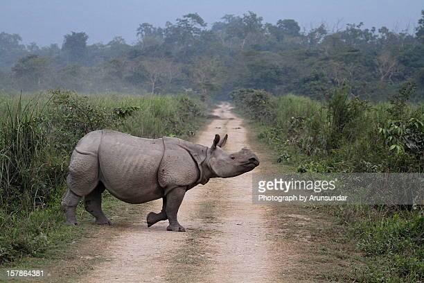 Rhino Crossing...