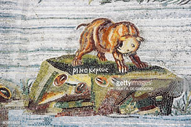 Rhino detail from the Nilotic mosaic of the flooding of the river Nile in Egypt from the Sanctuary of Fortuna Primigenia at Palestrina Lazio Italy...