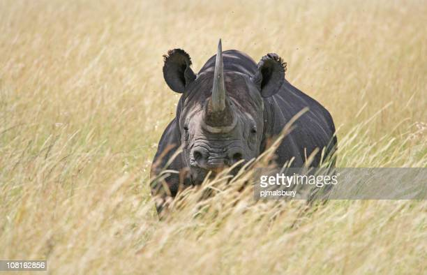 Rhino in Serengeti