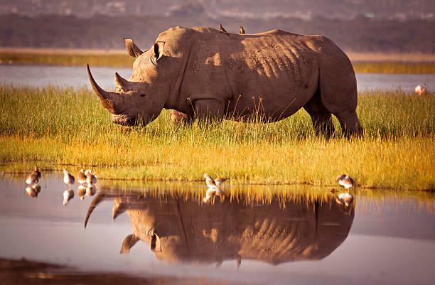 Rhino Reflection Wall Art