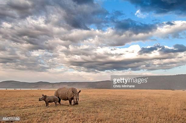 Rhino with Baby Stock Photo
