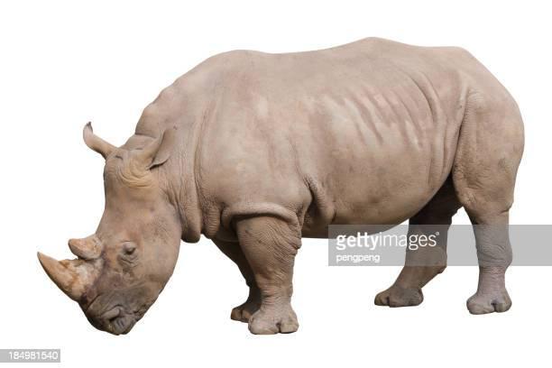 Rhino with path