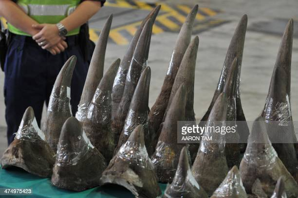Rhinoceros horns are displayed in Hong Kong's Customs and Excise Department Offices on November 15 2011 Hong Kong Customs on November 14 seized 33...