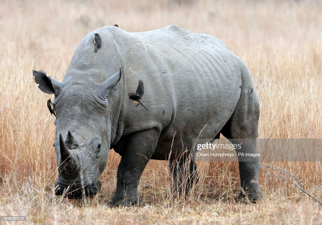 Pilanesburg National Park : News Photo