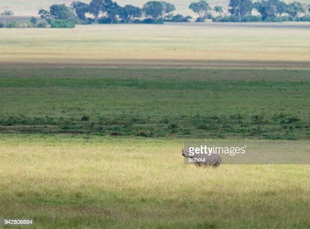 Rhinoceros, Landscape in Africa