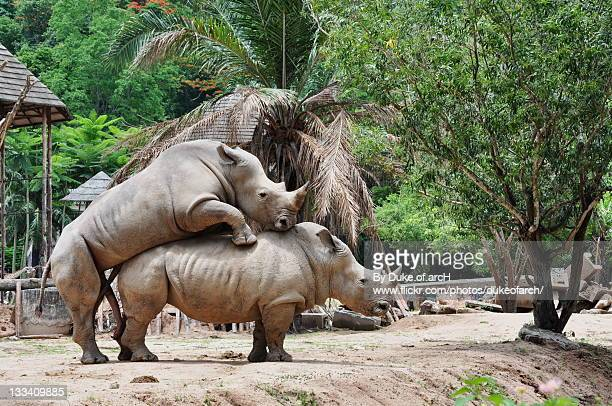 rhinoceros - www picture com stock photos and pictures