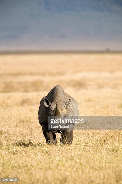 rhinoceros - one animal stock pictures, royalty-free photos & images