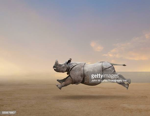 rhinoceros running in rural field - rushing the field stock pictures, royalty-free photos & images