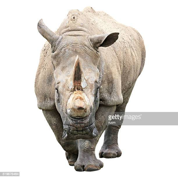 Rhinoceros with clipping path on white background