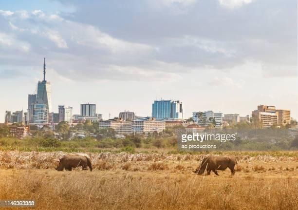 rhinoceroses walking in nairobi national park by city skyline in nairobi, kenya - nairobi stock pictures, royalty-free photos & images