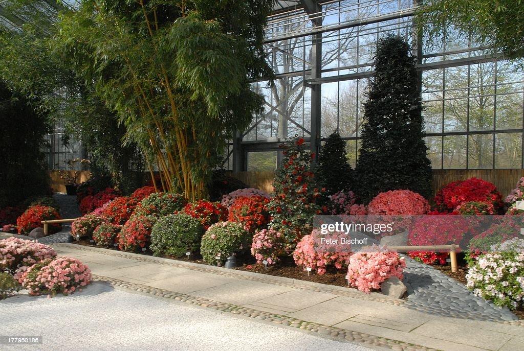 Rhododendren Im Gewachshaus Ausstellung Botanica Photo D
