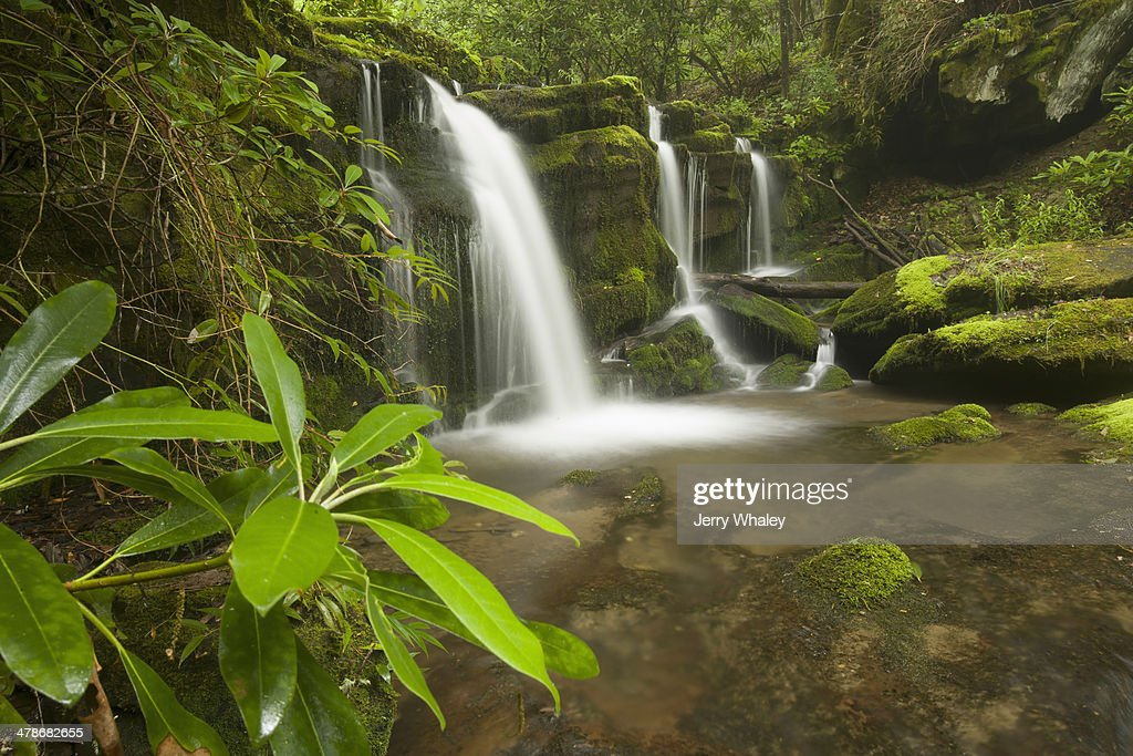 Rhododendron and waterfalls : Stock Photo