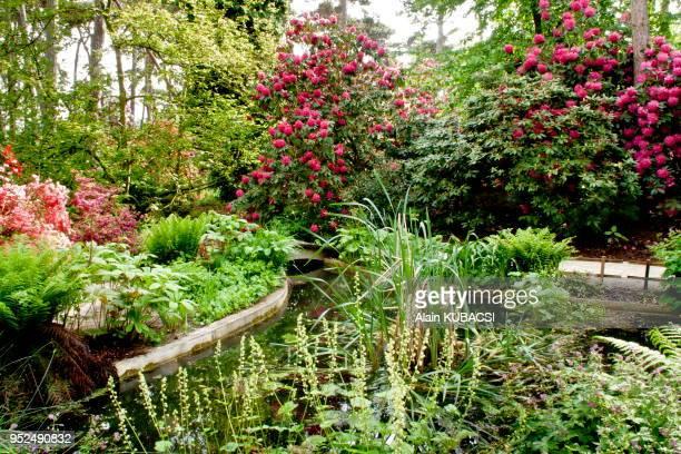 Rhododendron 'Cynthia', Jardin aquatique, Parc Floral de Vincennes, Paris, France.