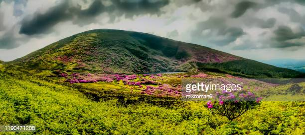 rhododendron forest valley. - county waterford ireland stock pictures, royalty-free photos & images