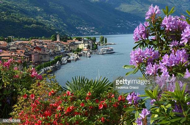 Rhododendrons and Azaleas on Lake Maggiore