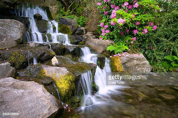 rhododendrons beside waterfall, crystal springs garden, oregon, usa - heather brooke ストックフォトと画像