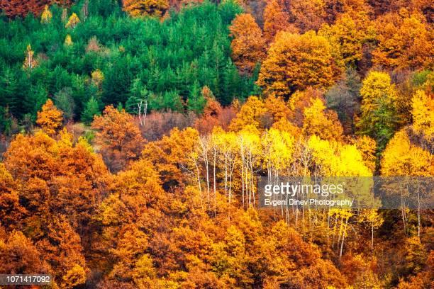 rhodope mountain, bulgaria - the colors of autumn - árvore de folha caduca - fotografias e filmes do acervo