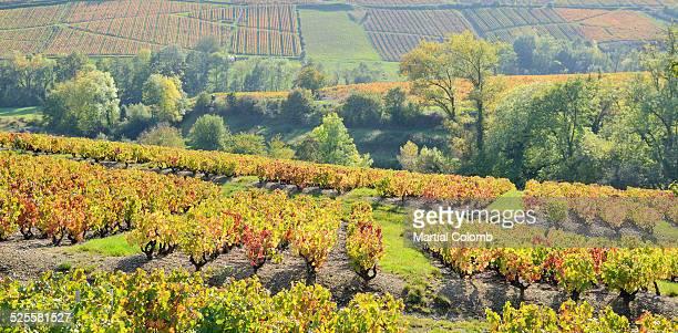 Rhone/Beaujolais region/vineyards