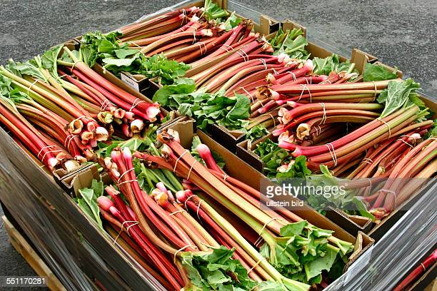 Rhubarb bunches packed into boxes