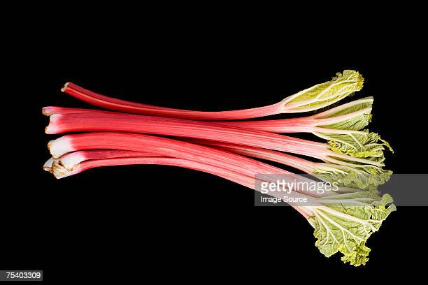 rhubarb - rhubarb stock photos and pictures