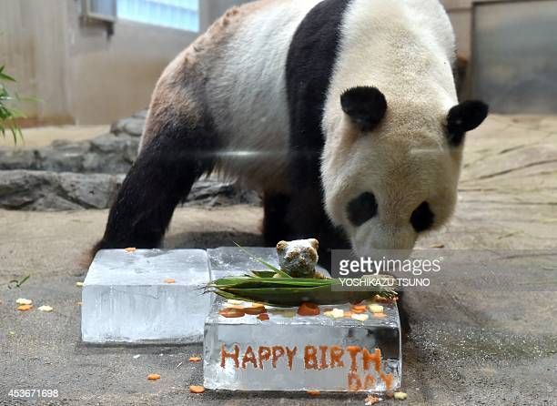 Ri Ri a male giant panda eats a birthday cake in his enclosure at the Ueno zoo in Tokyo on August 16 2014 The zoo celebrated Ri Ri's ninth birthday...